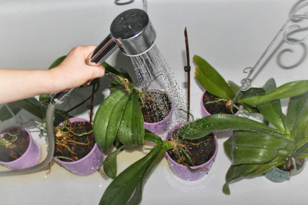 Wässerung von Zimmerpflanzen