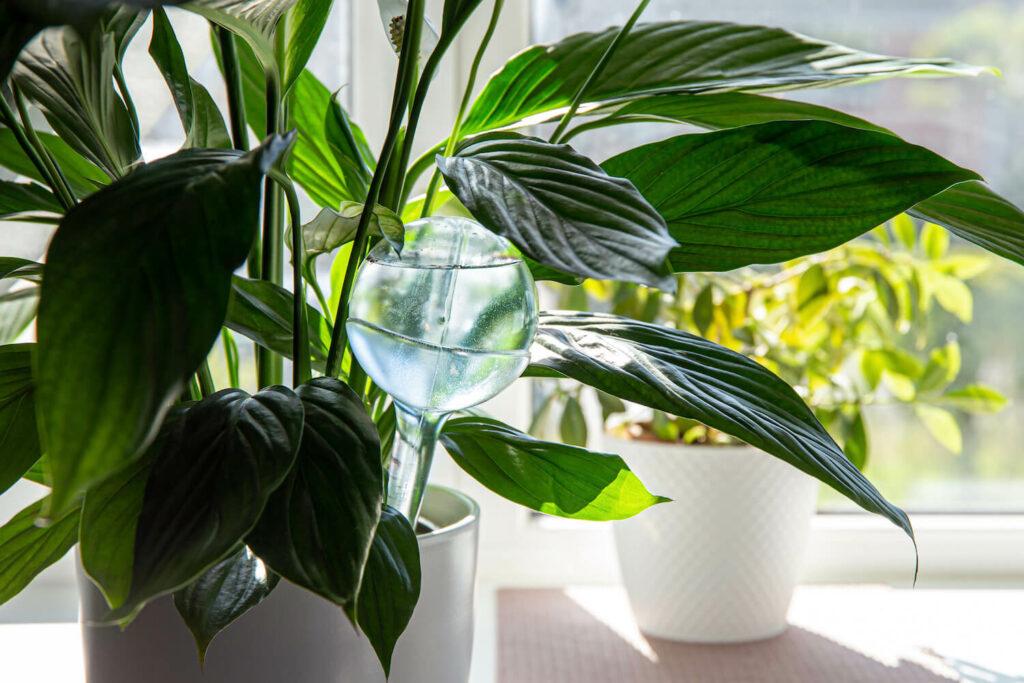 Bewässerung mit Glasgefäß
