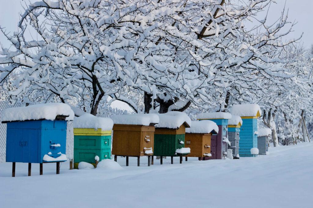 Bienenstöcke mit Schnee