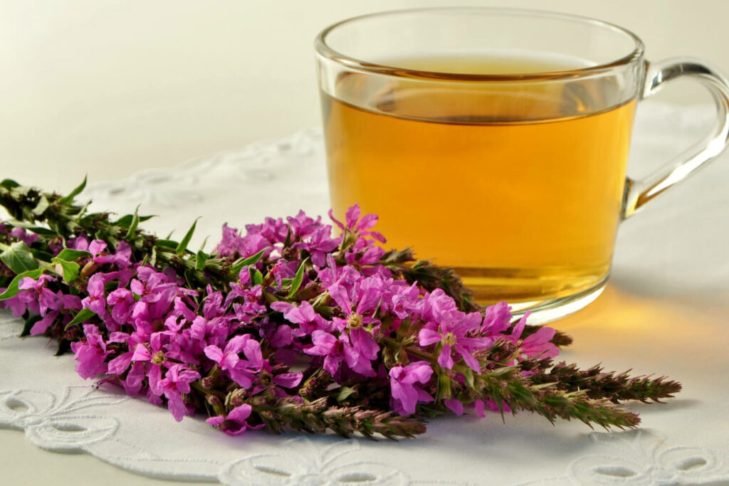 Tee aus Blutweiderich-Blüten
