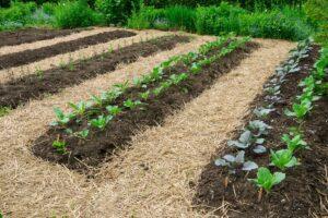 Beet anlegen ohne Umgraben: Die No-dig Methode