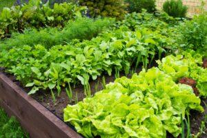Gemüsebeet anlegen: Standort, Pflanzplan & Anleitung