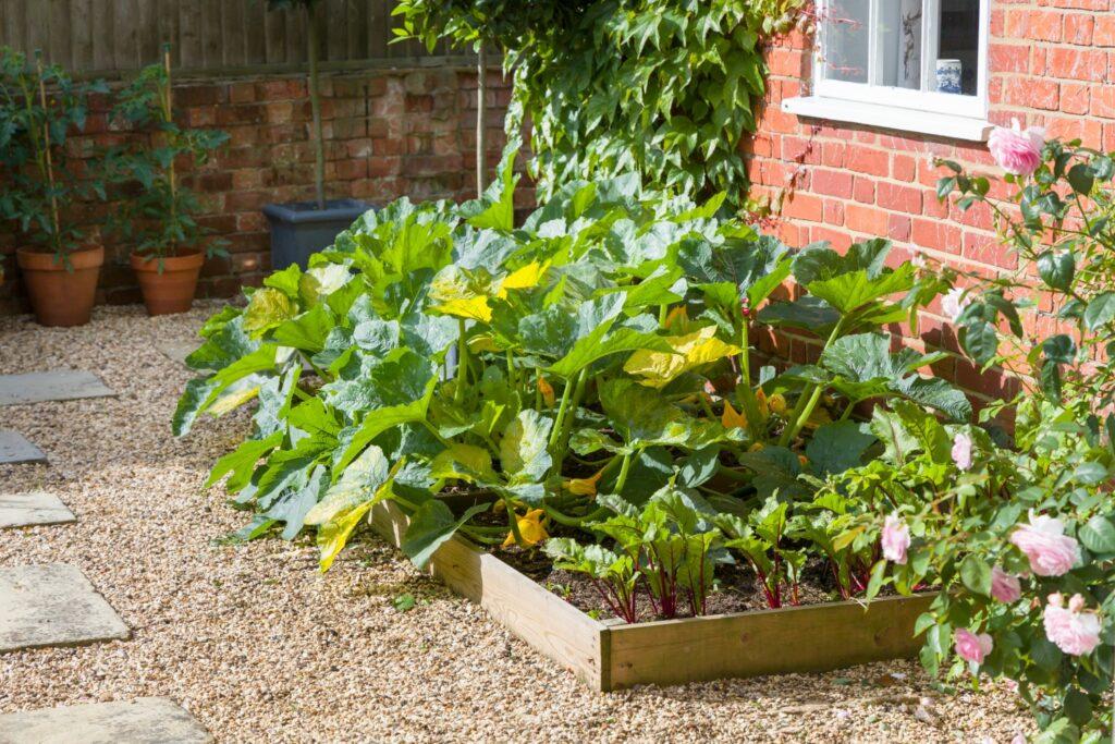 Gemüsebeet mit Zucchini an Hauswand