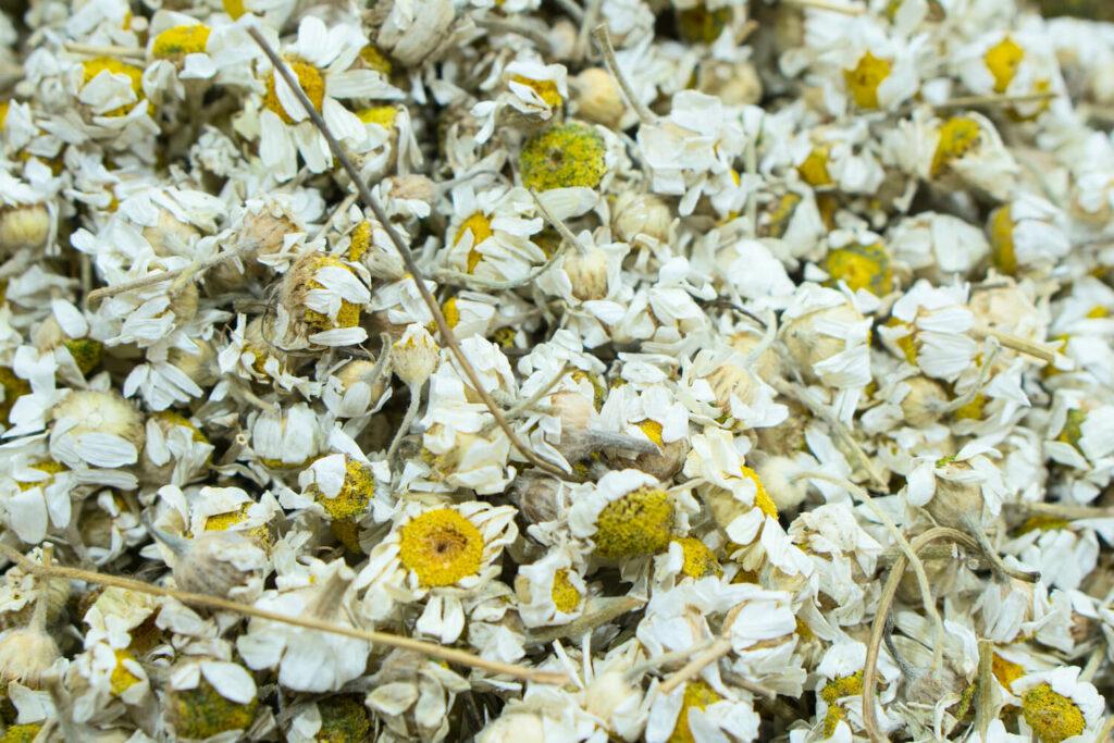 getrocknete Kamillen-Blüten