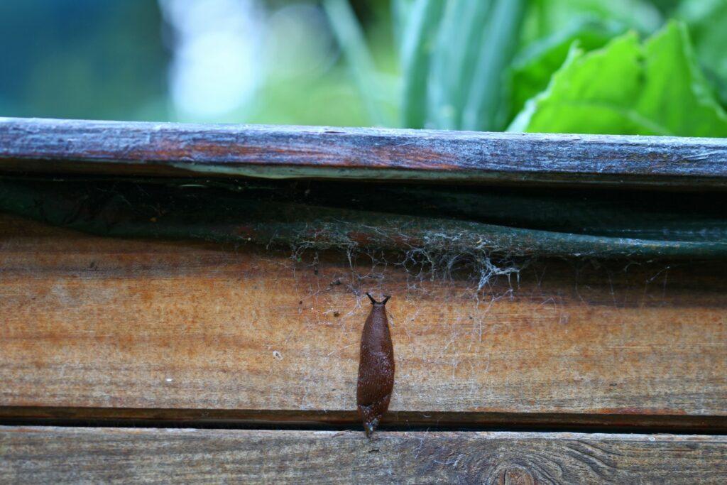 Schnecke klettert Hochbeet hinauf