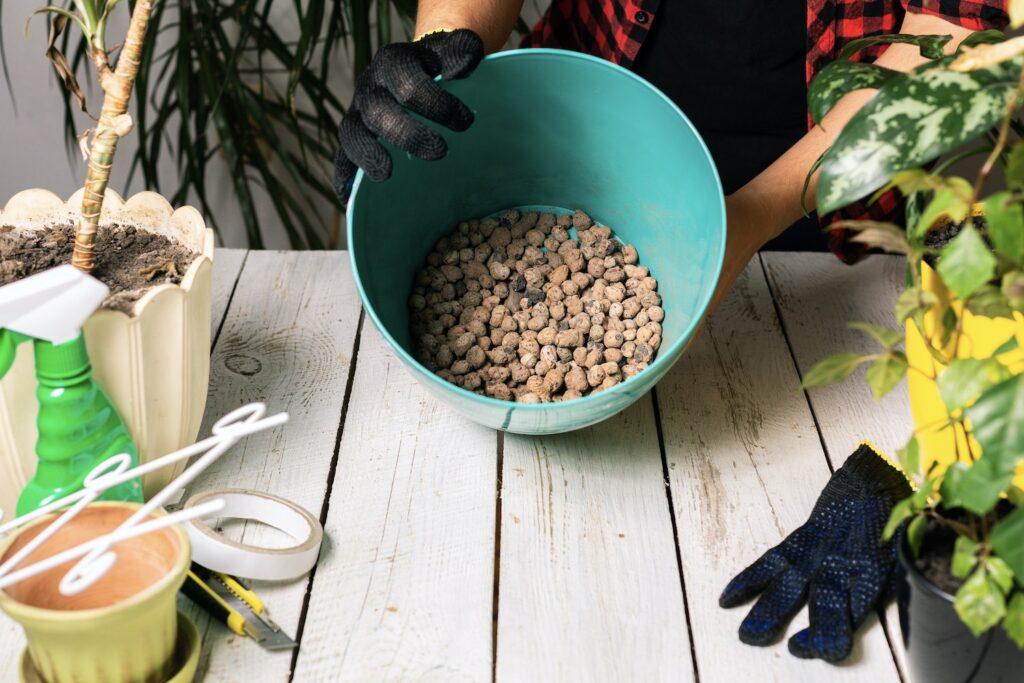 Umtopfen der Kaffeepflanze