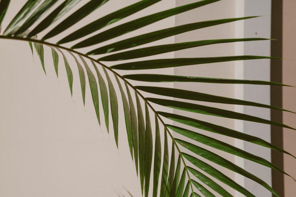 Kentia-Palmenblatt
