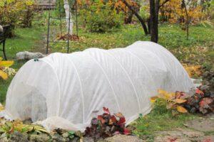 Pflanzen vor Frost schützen: Tipps & verschiedene Möglichkeiten