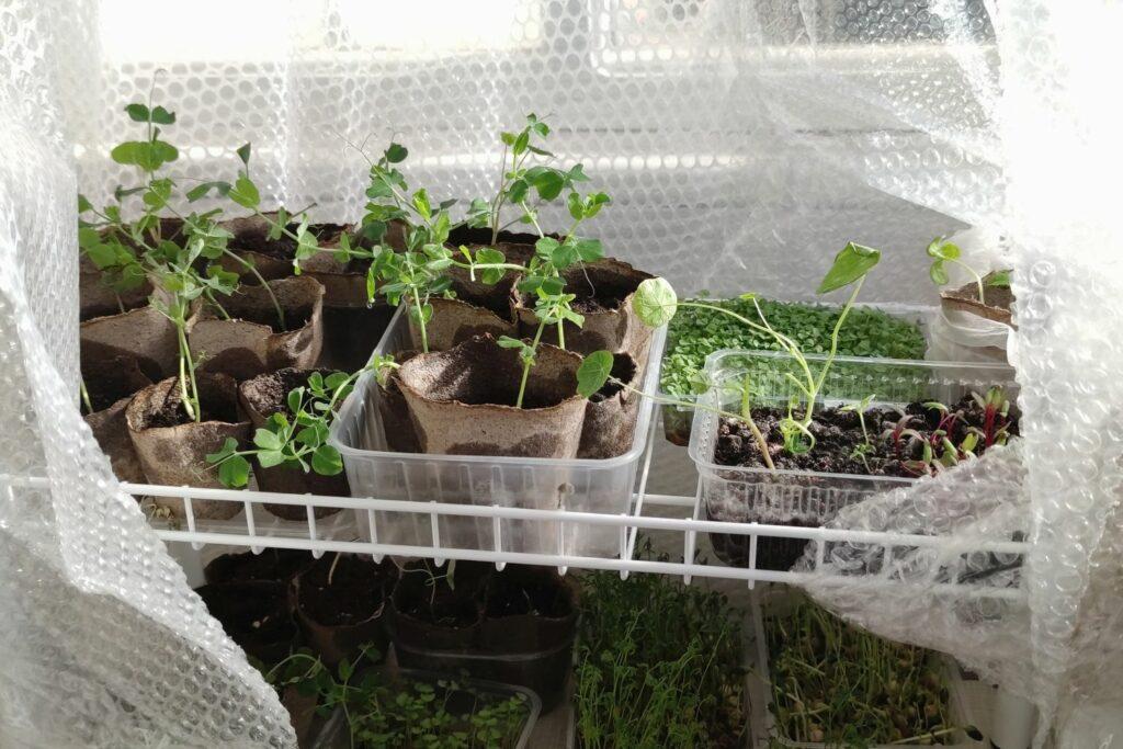 Pflanzen unter einer Luftpolsterfolie