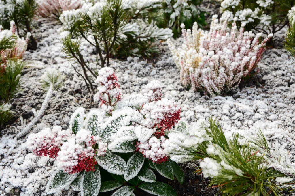 Garten mit Frost
