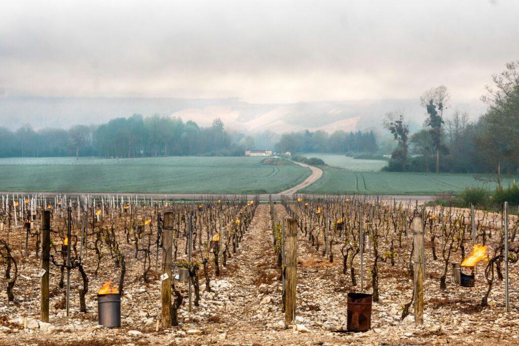 Frostschutzkerzen beim Weinbau
