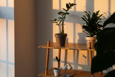Pflanzen für dunkle Räume: Welche Zimmerpflanzen brauchen wenig Licht